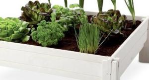 Vierkante meter tuin moestuin aveve