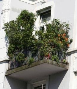 Woonblog terras balkon moestuin 02