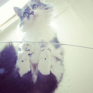 Katten 11