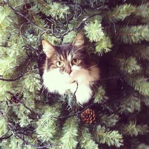Katten 01