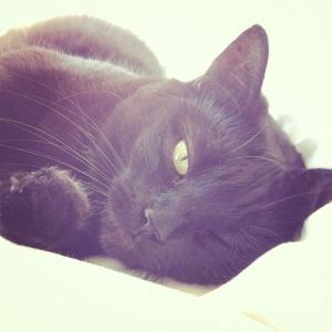 Katten 18