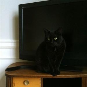 Katten 14
