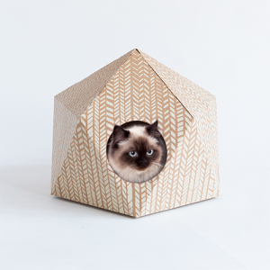 catcube delphine courier
