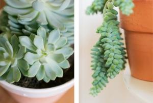 Woonblog plantenhoek cactus vetplantjes 081