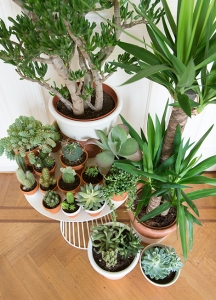 Woonblog plantenhoek cactus vetplantjes 15