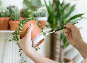 Woonblog plantenhoek cactus vetplantjes 05