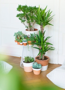 Woonblog plantenhoek cactus vetplantjes