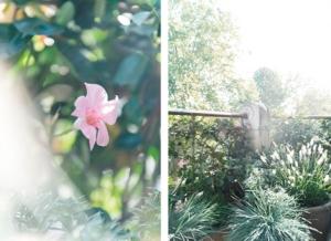 Planten-balkon-tuin-terras-stad-groen-04